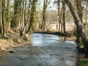 Year 10 River Darent Field trip