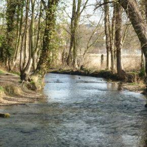 Year 10 River Darent Fieldtrip